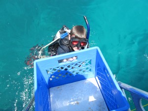 Handing up the lionfish (in bottom of crate)....Simple catching technique.  Thanks Jim!