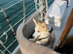 Fortunately, there is a rail that Hermes cannot jump over.  He does not like it when divers go into the water.  In his little mind, why would we jump off a perfectly good boat!