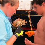 Megan and Colton work on pulling the digestive vein out of the tail.  Funnily enough, if you stick the lobsters broken off antennae through it's tail, the vein comes right out.